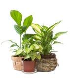 παράθυρο φυτών ομάδας Στοκ Εικόνα