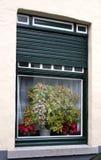 παράθυρο φυτών Στοκ εικόνα με δικαίωμα ελεύθερης χρήσης