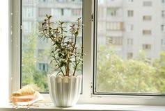 παράθυρο Στοκ εικόνα με δικαίωμα ελεύθερης χρήσης