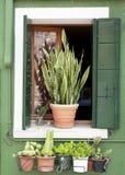 Παράθυρο Burano Στοκ Φωτογραφίες