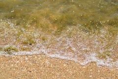 Παράκτια κύματα θάλασσας Νερό της θάλασσας με το φύκι Παράκτια άλγη θάλασσα αποβαθρών μονοπατιών παραλιών Στοκ φωτογραφίες με δικαίωμα ελεύθερης χρήσης