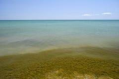 Παράκτια κύματα θάλασσας Νερό της θάλασσας με το φύκι Παράκτια άλγη θάλασσα αποβαθρών μονοπατιών παραλιών Στοκ Εικόνες