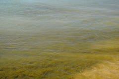 Παράκτια κύματα θάλασσας Νερό της θάλασσας με το φύκι Παράκτια άλγη θάλασσα αποβαθρών μονοπατιών παραλιών Στοκ εικόνα με δικαίωμα ελεύθερης χρήσης