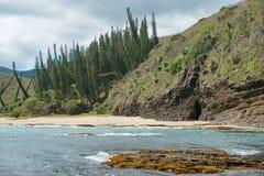 Παράκτια πεύκα παραλιών απότομων βράχων τοπίων της Νέας Καληδονίας Στοκ Φωτογραφίες