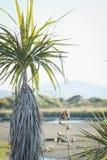 Παράκτια σκηνή της Νέας Ζηλανδίας με ένα εγγενές δέντρο λάχανων και έναν θάμνο λιναριού Στοκ εικόνα με δικαίωμα ελεύθερης χρήσης