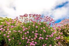 Παράκτια χλωρίδα πορειών της Ουαλίας Στοκ φωτογραφία με δικαίωμα ελεύθερης χρήσης