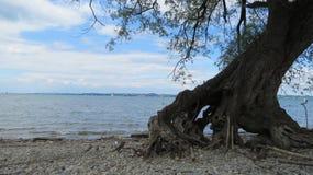 Παράκτιο δέντρο Στοκ Φωτογραφίες