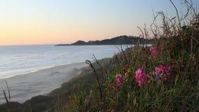 Παράκτιο Wildflowers στο ηλιοβασίλεμα απόθεμα βίντεο