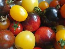 παράξενες ντομάτες στοκ εικόνες