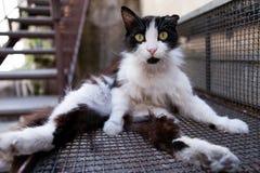 Παράξενη γάτα Στοκ φωτογραφίες με δικαίωμα ελεύθερης χρήσης