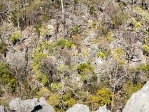 Παράξενοι σχηματισμοί βράχου ασβεστόλιθων - Tsingy, επιφύλαξη Ankarana, Μαδαγασκάρη Στοκ φωτογραφίες με δικαίωμα ελεύθερης χρήσης