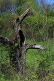 Παράξενος κορμός δέντρων στοκ εικόνες