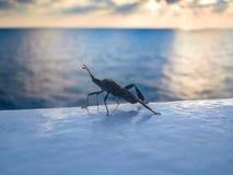 Παράξενο έντομο στο κιγκλίδωμα του σκάφους Στοκ εικόνα με δικαίωμα ελεύθερης χρήσης