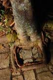 Παράξενο δέντρο ρίζας Στοκ Εικόνα