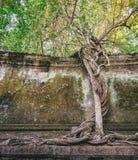 Παράξενο δέντρο σε Beng Melea, Angkor, Καμπότζη Στοκ φωτογραφίες με δικαίωμα ελεύθερης χρήσης