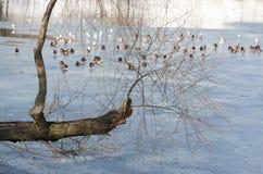 Παράξενο δέντρο Στοκ Εικόνες