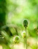Παράξενο πράσινο λουλούδι Στοκ φωτογραφία με δικαίωμα ελεύθερης χρήσης