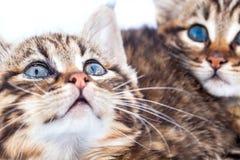Παράτολμα γατάκια Στοκ Φωτογραφία