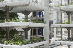 Παράδειγμα hydroponics Στοκ φωτογραφίες με δικαίωμα ελεύθερης χρήσης
