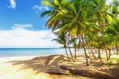 Παράδεισος παραλία τροπική Στοκ Εικόνες