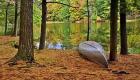 Παράδεισος ψαρά στοκ εικόνες