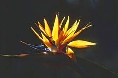 παράδεισος tenerife Κανάριων νησιών πουλιών στοκ φωτογραφίες με δικαίωμα ελεύθερης χρήσης