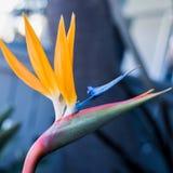 παράδεισος tenerife Κανάριων νησιών πουλιών στοκ εικόνες με δικαίωμα ελεύθερης χρήσης