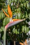 παράδεισος tenerife Κανάριων νησιών πουλιών στοκ φωτογραφία με δικαίωμα ελεύθερης χρήσης