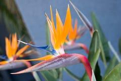 παράδεισος tenerife Κανάριων νησιών πουλιών στοκ εικόνα με δικαίωμα ελεύθερης χρήσης