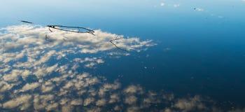 Παράλληλοι κόσμοι στο νερό Στοκ εικόνες με δικαίωμα ελεύθερης χρήσης