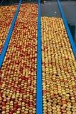 παραγωγή μήλων Στοκ Φωτογραφίες