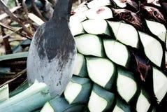 Παραγωγή tequila αγαύης Στοκ εικόνες με δικαίωμα ελεύθερης χρήσης