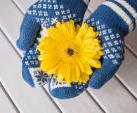 Παραδίδει τα γάντια κρατά ένα λουλούδι gerbera Στοκ φωτογραφίες με δικαίωμα ελεύθερης χρήσης
