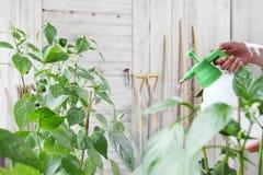 Παραδίδει το φυτοφάρμακο ψεκασμών φυτικών κήπων στο φύλλο του φυτού, αυτοκίνητο στοκ φωτογραφία