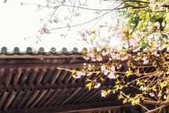 Παραδοσιακά ιαπωνικά κεραμίδια στεγών και ανθίζοντας λουλούδια sakura στο S Στοκ Φωτογραφίες