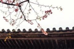 Παραδοσιακά ιαπωνικά κεραμίδια στεγών και ανθίζοντας λουλούδια sakura στο S Στοκ φωτογραφίες με δικαίωμα ελεύθερης χρήσης