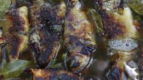 Παραδοσιακά ψάρια άλμης στο δέλτα Δούναβη απόθεμα βίντεο
