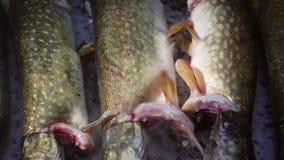 Παραδοσιακά ψημένα ψάρια σε ένα κρεβάτι του άλατος στο δέλτα Δούναβη φιλμ μικρού μήκους