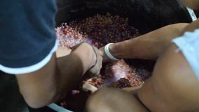 Παραδοσιακή ακατέργαστη πρωτόγονη μέθοδος Bignay χεριού επεξεργασίας εγχώριου κρασιού που και που συντρίβει των φρούτων απόθεμα βίντεο