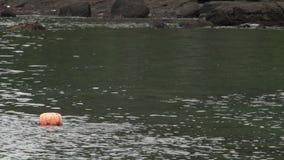 Παραδοσιακοί γυναίκα-δύτες στο νησί Jeju, που καλείται επίσης ως Haenyeo, που συλλέγει τα οστρακόδερμα στη θάλασσα απόθεμα βίντεο