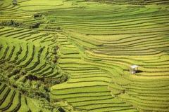 Παραδοσιακοί τομείς πεζουλιών ρυζιού στη MU Cang Chai στην περιοχή του Βιετνάμ SAPA στοκ φωτογραφία με δικαίωμα ελεύθερης χρήσης