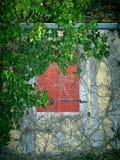 Παραθυρόφυλλα που εισβάλλονται παλαιά με τη βλάστηση στοκ εικόνα