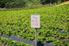 ` Παρακαλώ μην επιλέξτε εδώ το σημάδι ` σε ένα οργανικό αγρόκτημα φραουλών u-επιλογών, Καλιφόρνια Στοκ Εικόνες