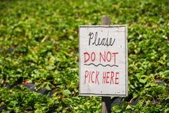 ` Παρακαλώ μην επιλέξτε εδώ το σημάδι ` σε ένα οργανικό αγρόκτημα φραουλών u-επιλογών, Καλιφόρνια Στοκ Εικόνα