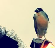 Παρακαλώ don't με απασχολήστε, λέει το πουλί Στοκ εικόνα με δικαίωμα ελεύθερης χρήσης