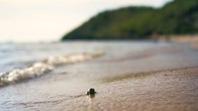 Παραλία άμμου με θάλασσας ρηχό βάθος εστίασης κυμάτων το επίλεκτο του τομέα με τη θερινή ατμόσφαιρα απόθεμα βίντεο