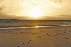 Παραλία γερανών που φωτίζεται από τον ήλιο βραδιού στοκ εικόνες