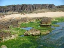 Παραλία για να αναπηδήσει με τις πράσινες εγκαταστάσεις στους βράχους και στην απόσταση ένα δάσος των ξηρών πεύκων Ιταλία στοκ εικόνες με δικαίωμα ελεύθερης χρήσης