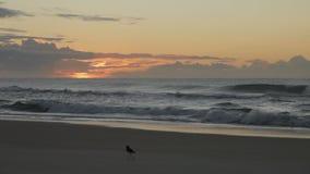 Παραλία και πουλί απόθεμα βίντεο
