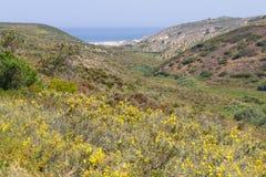 Παραλία, λουλούδια και βουνό σε Arrifana Στοκ εικόνα με δικαίωμα ελεύθερης χρήσης